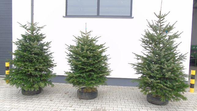 Choinka świąteczna Jodła świerk DETAL piękne gęste DUŻY WYBÓR tanio