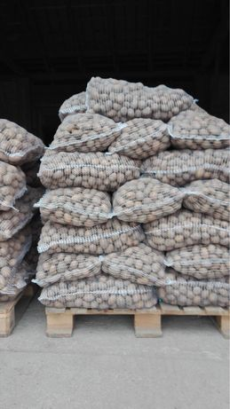 Ziemniaki Sifra kal 3-5