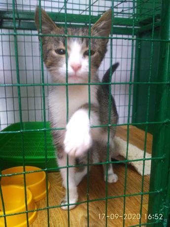 Ласковый домашний котёнок Кот.Котята.