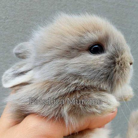 Шикарні декоративні кролики! Залишилося 2 вільних