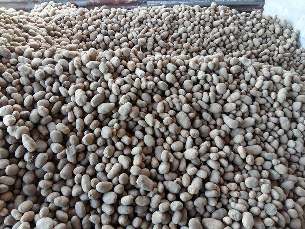 Ziemniaki jadalne wineta na oborniku