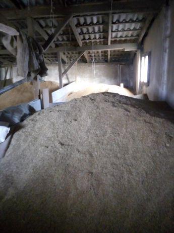 zboże żyto, śruta żytnia okolo 10 ton, nadaje sie na konsumpcję