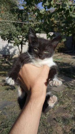 Котенок бесплатно