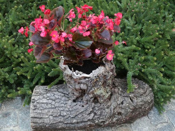 Tronco de carvalho tratado(floreira)