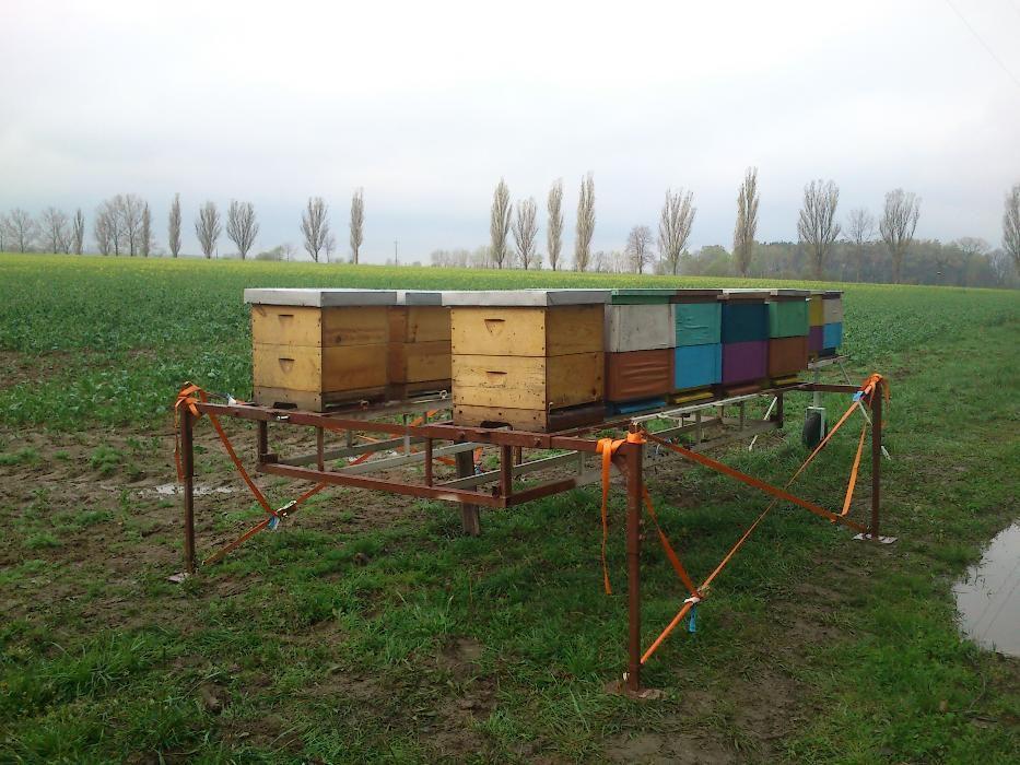 Platforma przyczepka nakładka do pasieki wędrownej Pszczoły Pasieka Mrozy - image 1