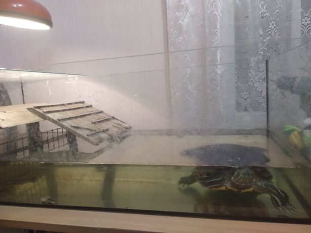 Большой аквариум с черепахой