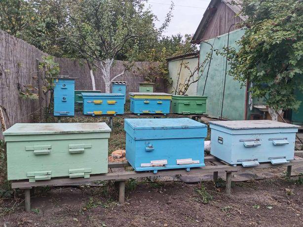 Пчелиные ульи с семьями