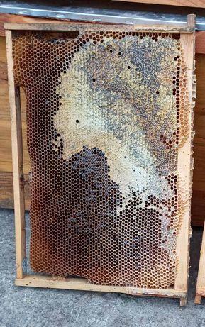Рамки з медом  та суш