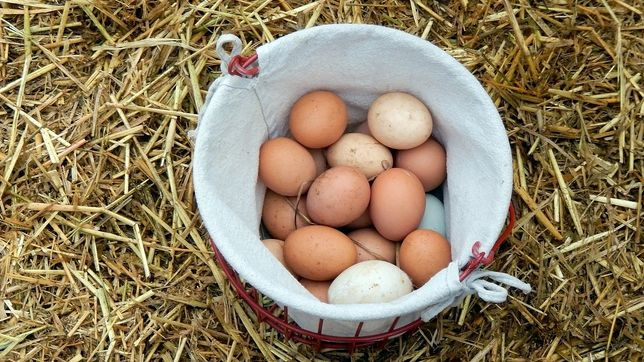 Vendo ovos caseiros