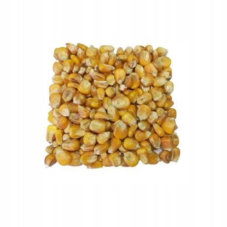 Kukurydza czyszczona pakowana w worki 25 kg