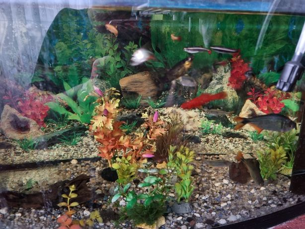 Akwaria z rybkami