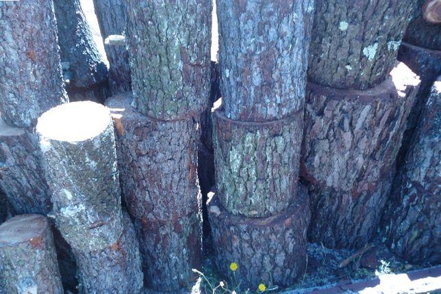 Rolos pinheiros para bricolage