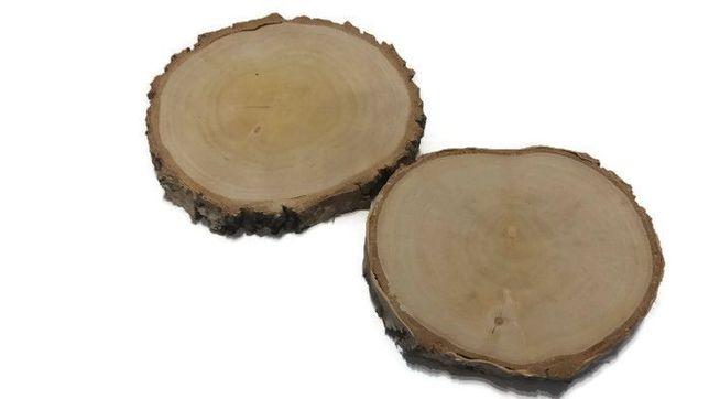 plastry drewna brzoza szlifowana 10-12 cm, gr. 2cm