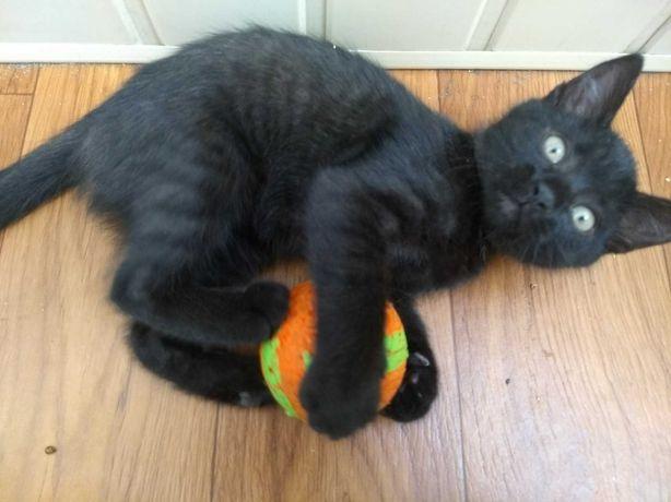 Красавица котёнок Ночка  ( 2,5 месяца)  ласковая