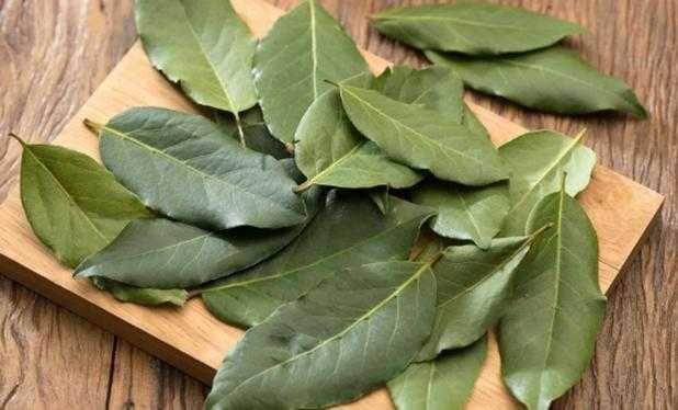 Venda louro seco ou verde