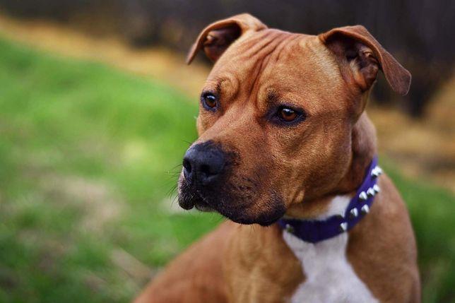 Przepiękny Bruno do adopcji!