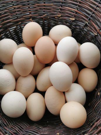 Świeże wiejskie jajeczka