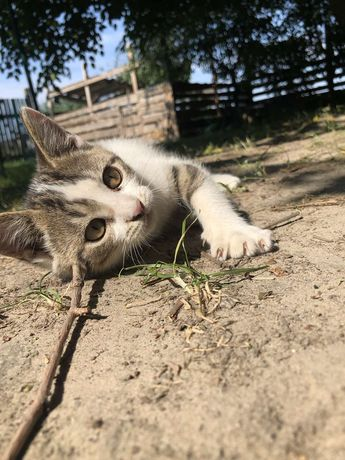 Котенок Герда в добрые руки 3 мес