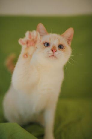 Подарю котика