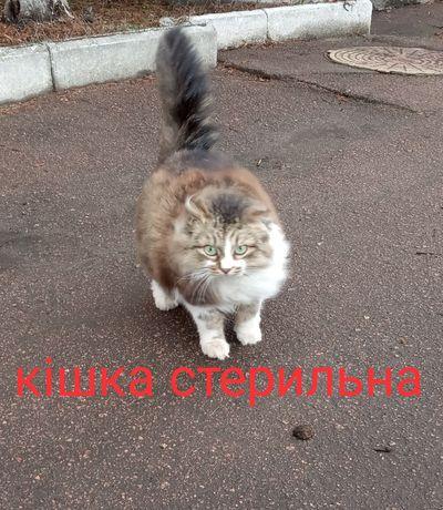 Продаж простої кішки