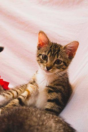 3 miesieczne kotki szukają swoich kochających domków :)