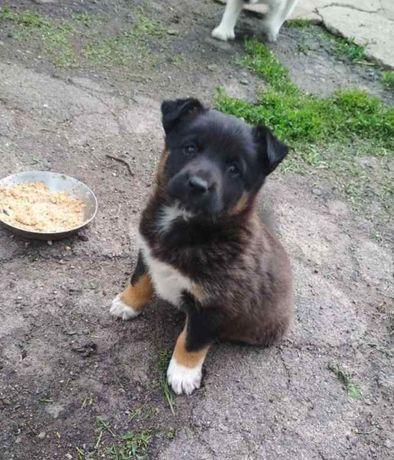 Небольшой щенок девочка в добрые руки