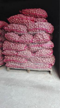 Ziemniaki Ricarda kal 3-5
