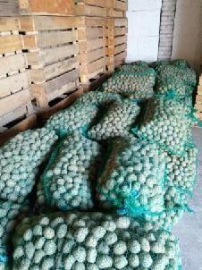Ziemniaki cyprian kaliber35-45 nie irga