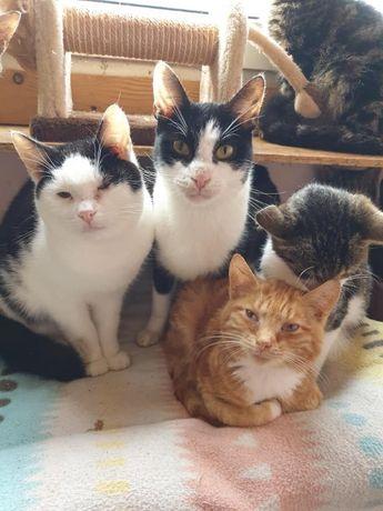 Cudowne kociaki zapraszają do adopcji