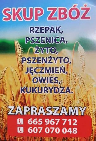 Skup zboża: pszenice, żyto, kukurydze, jęczmień, owies, pszenżyto.