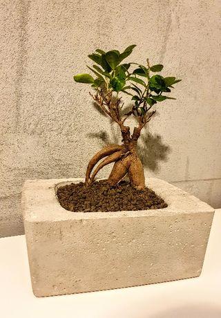 Doniczka betonowa bonsai