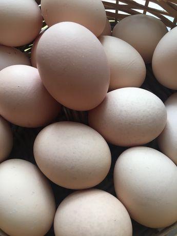 Ekologiczne jajka wiejskie