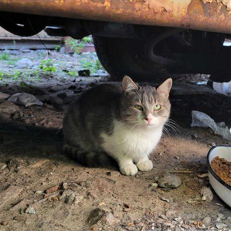 Серый котик ищет теплый дом