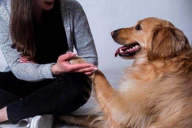 BEHAWIORYSTA / ZOOPSYCHOLOG – pies, kot, szkolenia i konsultacje