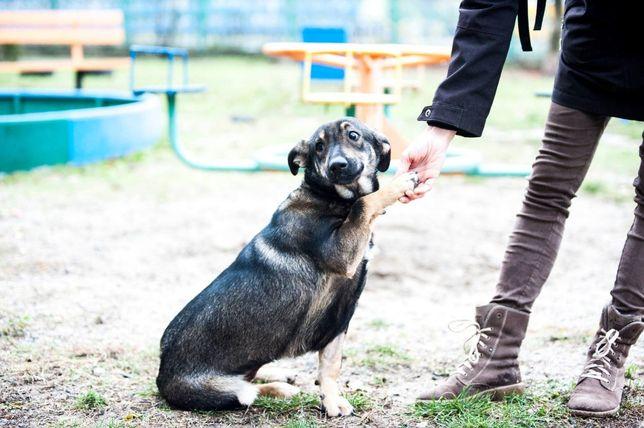 Собака стерилизована 11 месяцев