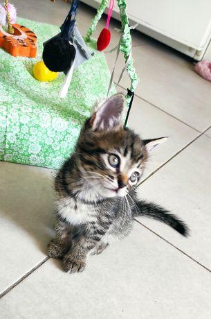 Котенок 1 месяц пацан