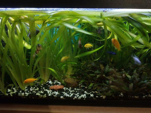 Akwarium 160 l z wyposażeniem