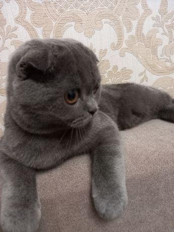 Пррдам кошку веслоухую