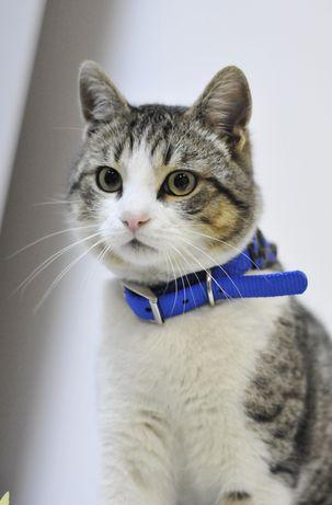 Василек+ красивый молодой котик в поиске семьи