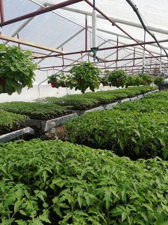 Rozsada warzyw 2021