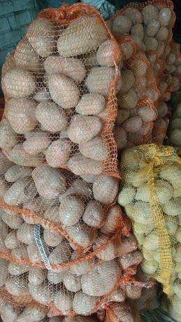 Ziemniaki jadalne Bellarosa Vineta