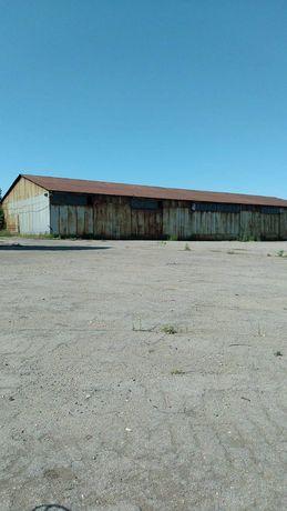 Ангар-зернохранилище/грузовое СТО 1,200 м2