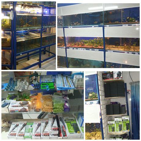 Мирные аквариумные рыбки,магазин аквариумистики,неоны,тернеции, данио
