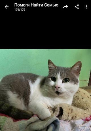 Кошечка Машенька 2 года стерилизована. Котики, котята, кошечка, кот