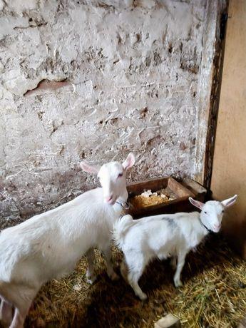Kozy i cap zadbane