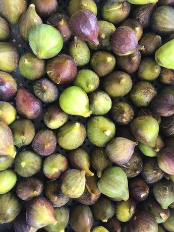 Figos de São João