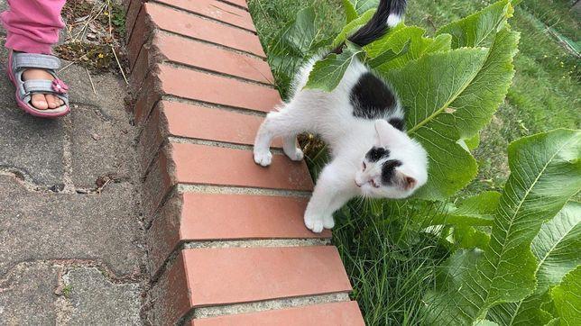 Oddam kotka w dobre ręce