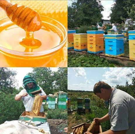 Мёд цветочный со своей пасеки