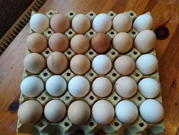 Wiejskie jajka ekologiczne