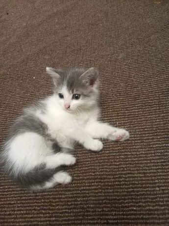 Кошеня хлопчик